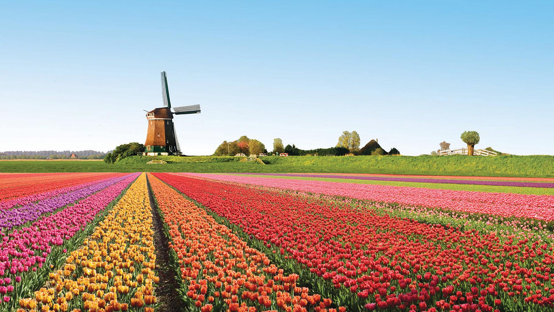 Незабываемое путешествие в мир цветов